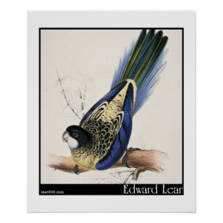 Edward Lear's Brown's Parakeet Poster