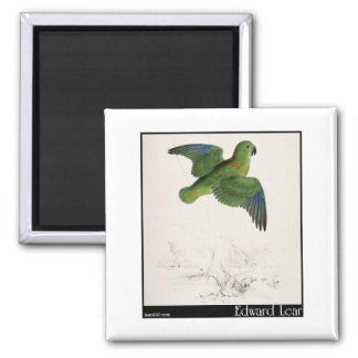 Edward Lear's Collared Parakeet in flight Magnets