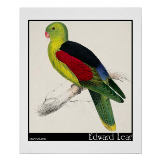 Edward Lear's Crimson-Winged Parakeet (Male) Poster