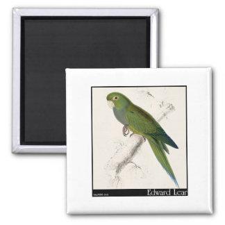 Edward Lear's Dwarf Parakeet-Macaw Magnet