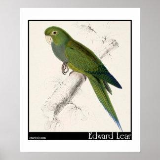Edward Lear's Dwarf Parakeet-Macaw Poster