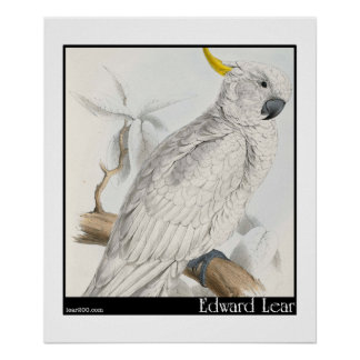 Edward Lear's Greater Sulphur-Crested Cockatoo Pos Poster