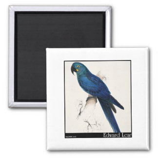Edward Lear's Hyacinth Macaw Magnets