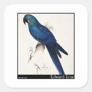 Edward Lear's Hyacinth Macaw Square Sticker