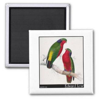 Edward Lear's Kuhl's Parakeet Fridge Magnet