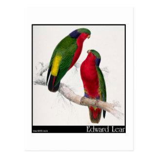 Edward Lear's Kuhl's Parakeet Postcard