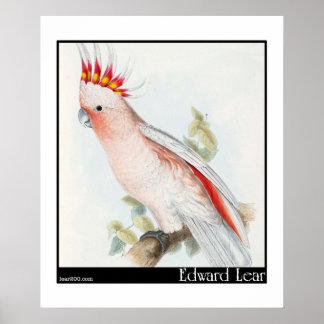 Edward Lear's Leadbeater's Cockatoo Poster