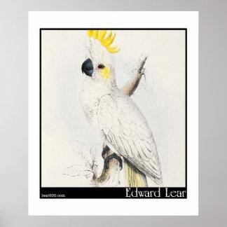 Edward Lear's Lesser Sulphur-Crested Cockatoo Poster
