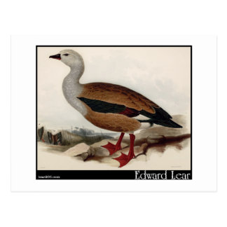 Edward Lear's Maned Goose Postcard