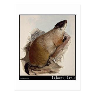 Edward Lear's Marmot Postcard