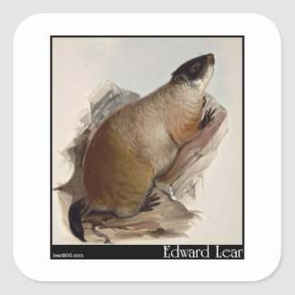 Edward Lear's Marmot Square Sticker