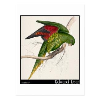 Edward Lear's Maton's Parakeet Postcard