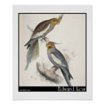 Edward Lear's New Holland Parakeet Poster