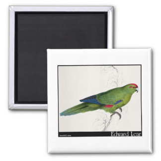 Edward Lear's Pacific Parakeet Refrigerator Magnets