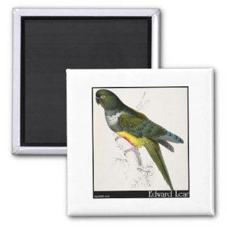 Edward Lear's Patagonian Parakeet-Macaw Fridge Magnet