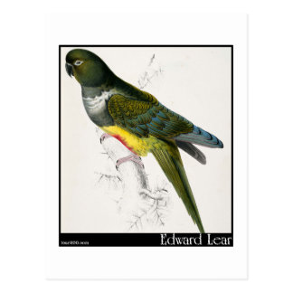 Edward Lear's Patagonian Parakeet-Macaw Postcard