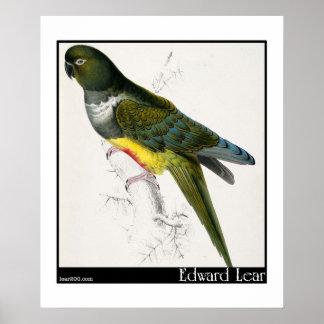 Edward Lear's Patagonian Parakeet-Macaw Poster