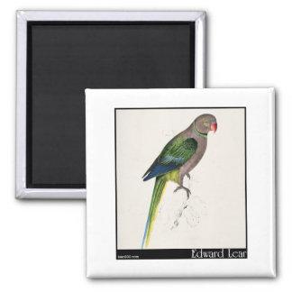 Edward Lear's Pigeon Parakeet Fridge Magnet