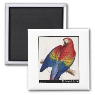 Edward Lear's Red and Yellow Macaw Fridge Magnet