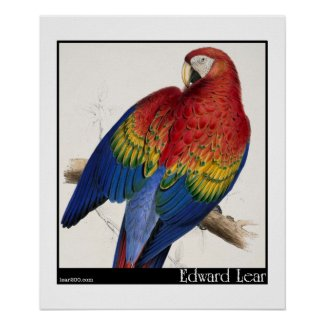 Edward Lear's Red and Yellow Macaw Poster