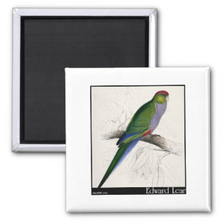 Edward Lear's Red-Capped Parakeet Female Magnet