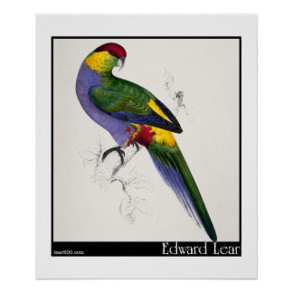 Edward Lear's Red-Capped Parakeet Male Poster