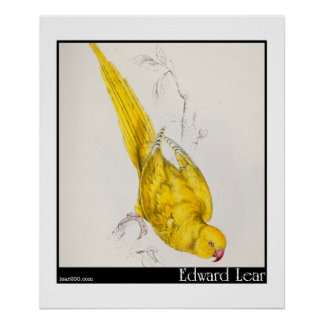Edward Lear's Rose-Ringed Parakeet Poster