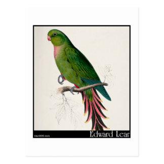 Edward Lear's Roseate Parakeet Postcard