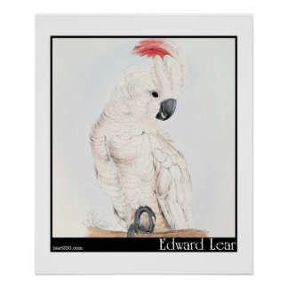 Edward Lear's Salmon-Crested Cockatoo Poster