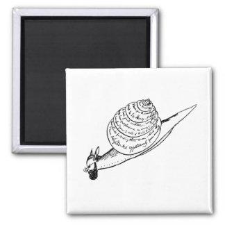 Edward Lear's Snail Mail Magnet
