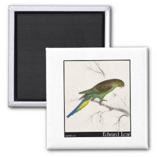 Edward Lear's Undulated Parakeet Magnet