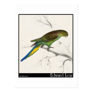 Edward Lear's Undulated Parakeet Postcard