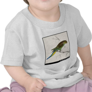 Edward Lear's Undulated Parakeet Tee Shirts