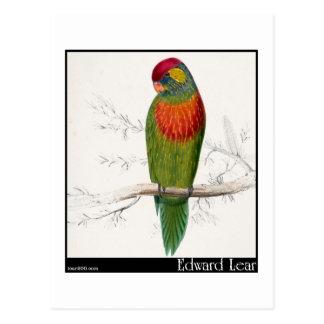 Edward Lear's Variegated Parakeet Postcard