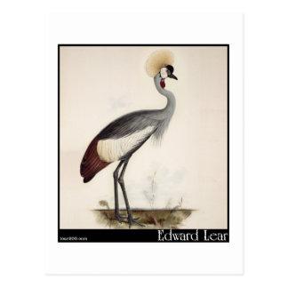 Edward Lear's Wattled Crown Crane Postcard
