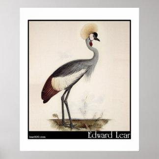 Edward Lear's Wattled Crown Crane Poster
