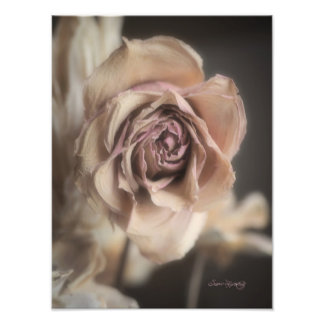EEHEREAL ROSE PHOTOGRAPH