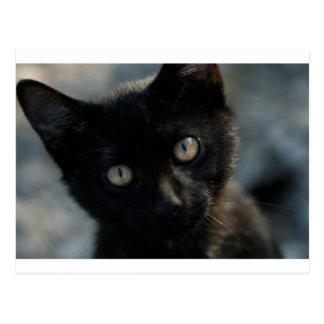 EEK Black Cat Scary Postcard