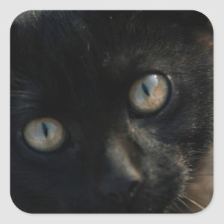 EEK Black Cat Scary Square Sticker