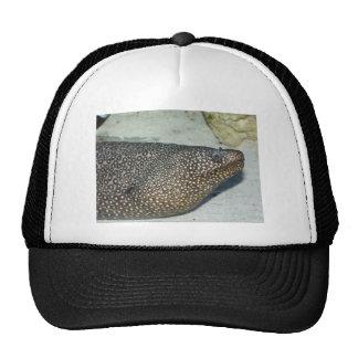 eel 1 trucker hat