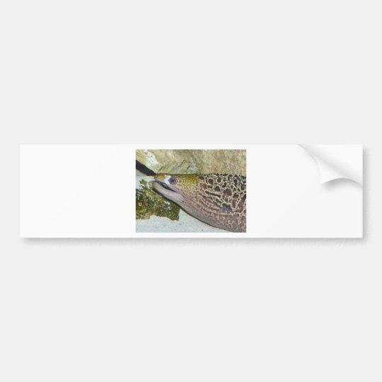 eel 2 bumper sticker