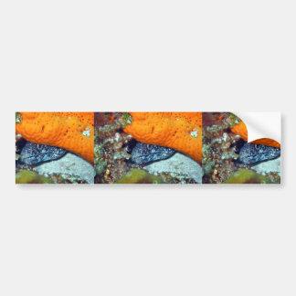 Eel Hiding Under Orange Plant Bumper Stickers
