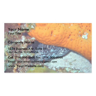 Eel Hiding Under Orange Plant Business Card Templates