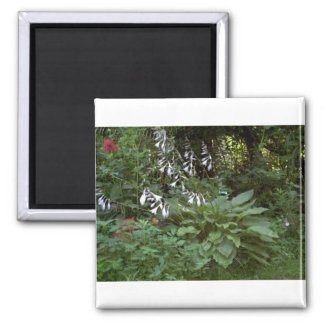 EelKat's Giant 100 Year Old Hosta 2 Inch Square Magnet