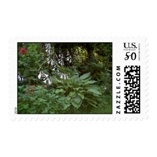EelKat's Giant 100 Year Old Hosta Postage