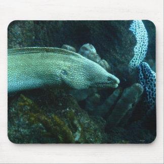 Eels Mousepad