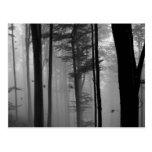 EERIE FOREST TREES LEAVES B&W POST CARD