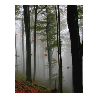 EERIE FOREST TREES LEAVES FULL FALL COLORS FLYER