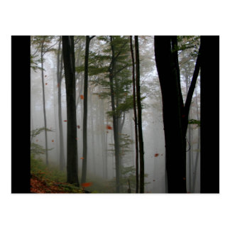 EERIE FOREST TREES LEAVES FULL FALL COLORS POSTCARD