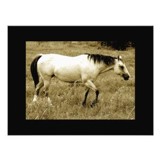 Efectos artísticos del caballo de granja del país  impresiones fotograficas